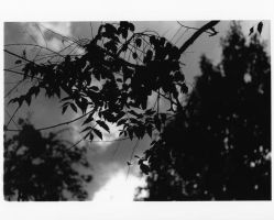 Shadow Leaves by Dl2a6on