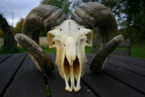 goat skull by borderline-stock