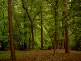 forest1 by faeryfroggy-stock