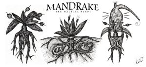 Mandrake the Magical Plant by retransmission