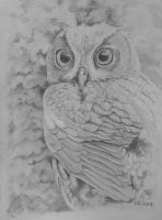 Owl sketch by acrylicwildlife