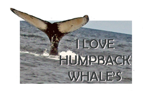 I Love Humpback Whales by Loulou13
