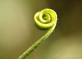 Curly tendril by Mark-Allison