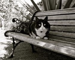 My Gorgeous Tuxedo Cat by MissSpocks