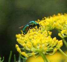 Rainbow Fly and Flower Macro by Jenvanw