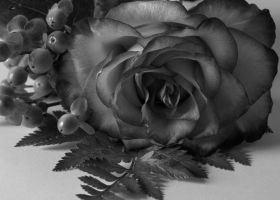 Black and White Flower by tainted-memories04