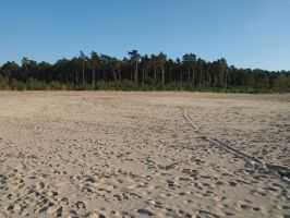 sand and forest landscape by Nexu4