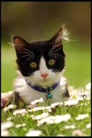 Spock in the grass by schumix