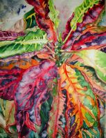 Red Croton by p-e-a-k