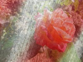 Grunge Rose Texture 02 by dknucklesstock