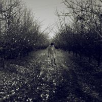 The orchard by VexingArt