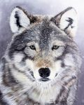 Wolf oil painting (80x100cm) by thefrenchberet