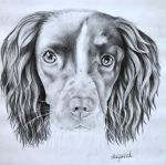 Tessa the Spaniel by MemoryInTime