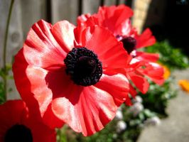Lest We Forget by paolo91