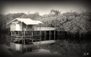 Halftones : River House by gizmo17