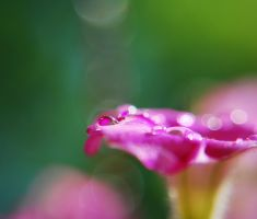a shower of pink by prettyflour