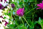 Flor by MyFotoYourPrint