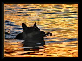 Swimming in the gold lake... by Yancis