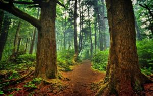 Trees Mighty Wood Footpath Roots Twisting Greens B by jeinex