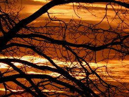 Glowing branches by Finnyanne