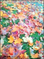 golden leaves of autumn 2 by DarraChese