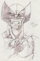 Wolverine by dilelis