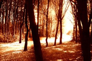 Sunlight through the forest by arghus