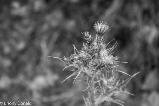 My Images-765 by Brebre193