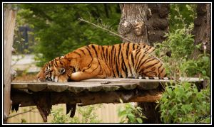 Taking an Afternoon Nap by amrodel