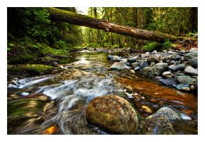 Forest Stream by Kamik636
