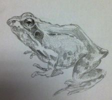 Quick frog sketch by SomeKindOfFairytale