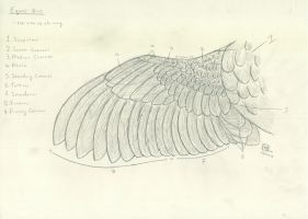 Equus-Avis: top view of the wing by Dogezon