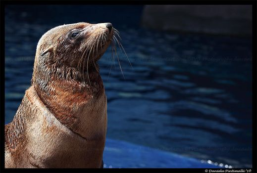 Seal: My Pool by TVD-Photography