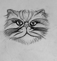 Persian cat head by pagone