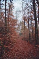 Odenwald Forest 04 by engineerJR