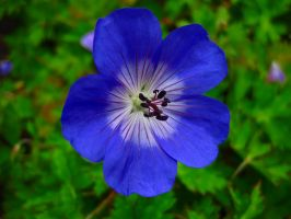 A  Blue flower by DomonAkuba