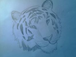 Tiger Sketch by FireFly1800