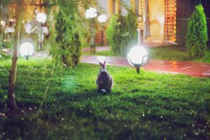 Spotlight Rabbit by RoeEbo