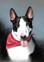 bullterrier portrait by bubumo