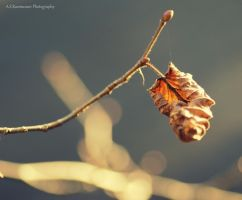 Fragile And Fair by photofreak385