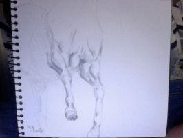 Horse muscles by brunonade