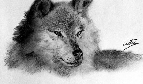 A Wolf by pilouuuu