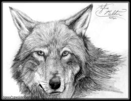 Realism 1 - Red Wolf by Apoca7ypse