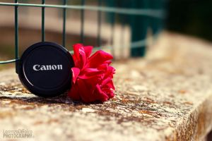 Love Canon by LorenzoDiFolco
