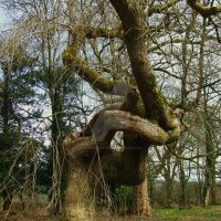 Twisted old tree by Yawn-Monster