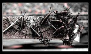 Bugz by 1000--Words