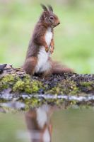 Stand Up Squirrel by AngelaLouwe