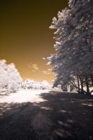 Park Life in IR 7 by fazz1977