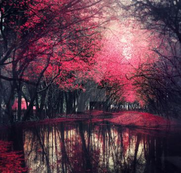 Pink forest - stock by Aeternum-designs