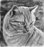 Cat Drawing by MLS-art